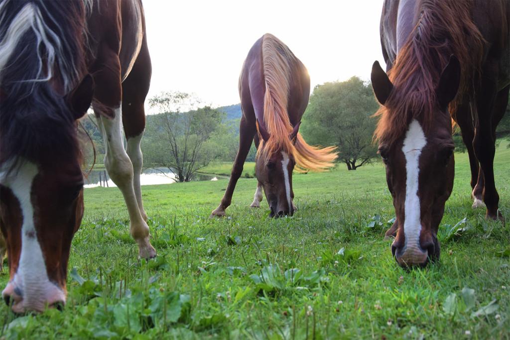 Triple Horse15600px